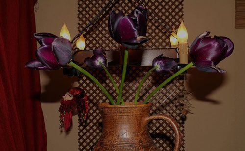 Black Tulips from Amsterdam
